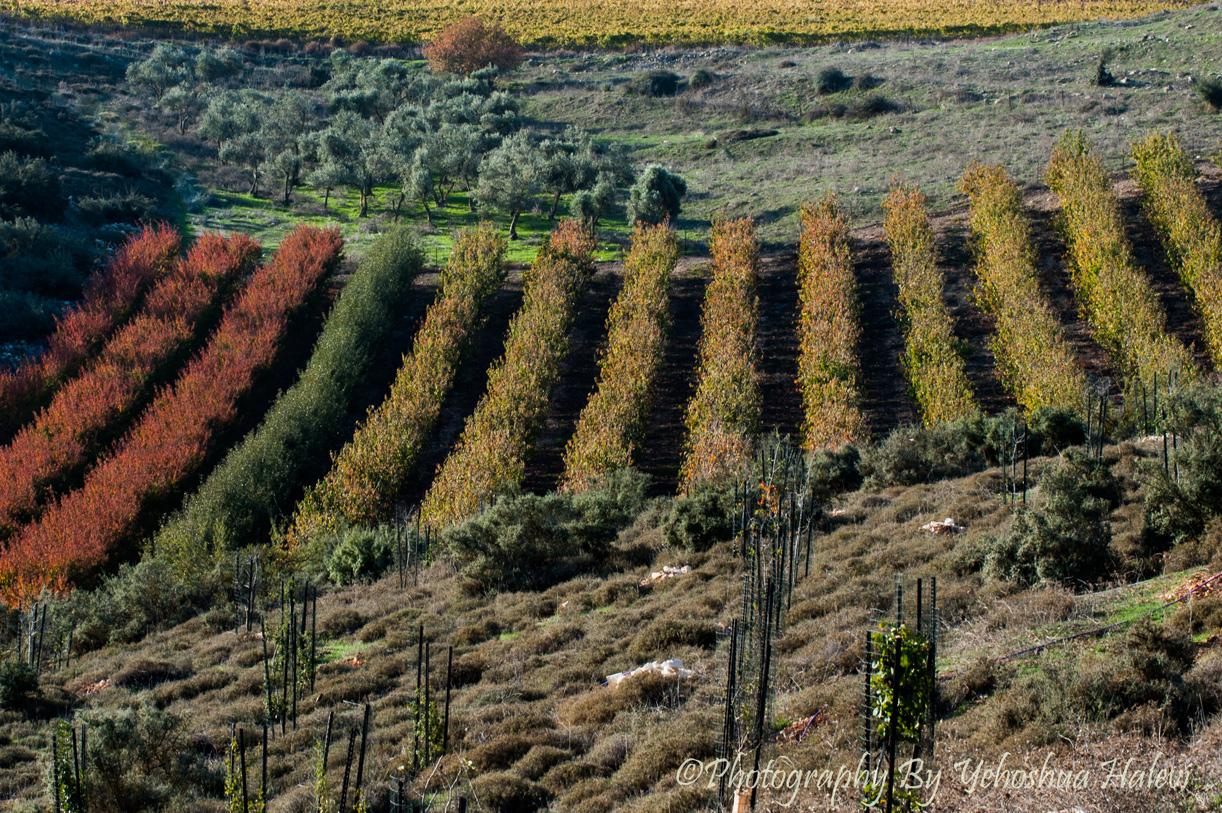 Israel, Fall, Galilee, Landscape