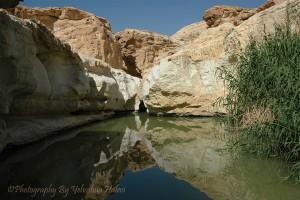 Spring, oasis, desert, Negev, Israel, Halevi
