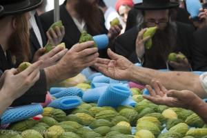 Sukkot, Succot, Etrog, holiday, Jewish, Yehoshua Halevi, workshop, photography, Israel