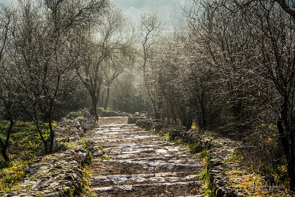 Dew drops sparkle on budding almond trees in this photograph of Israel in the Sataf Nature Reserve.